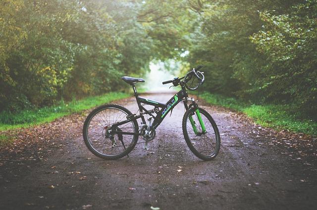 kolo na cestě v lese.jpg