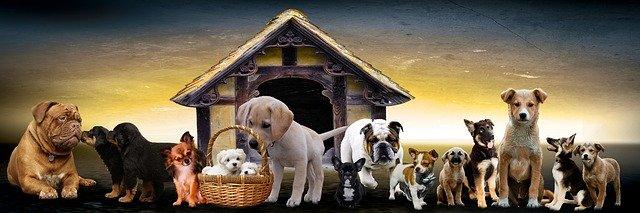 Hodně psů štěňata.jpg