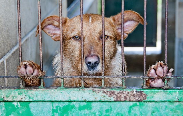 caged-278910_640.jpg