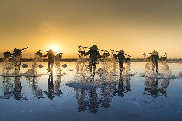 sklizeň ve Vietnamu